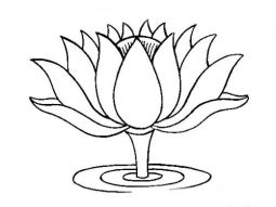lotus-image-drawing