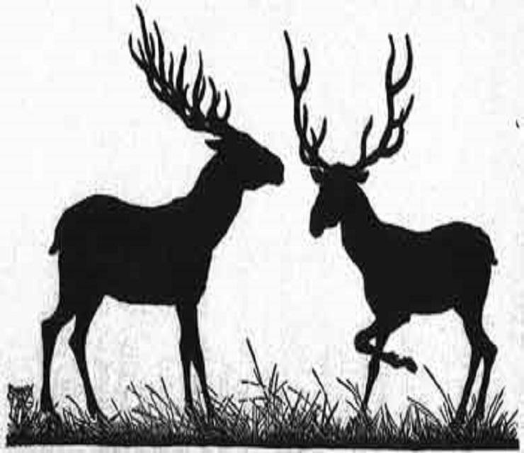 the-banyan-deer