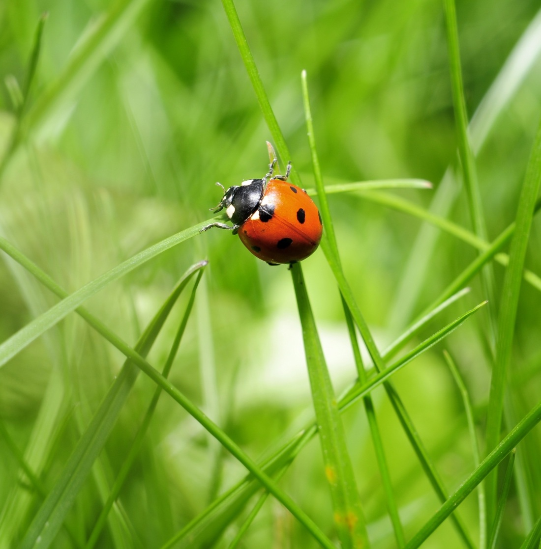 39743658-ladybird-wallpapers