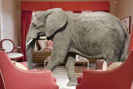 elephant-in-room